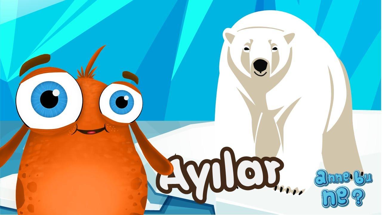 Ayılar Neden Kış Uykusuna Yatar Okul öncesi Eğitici Animasyon