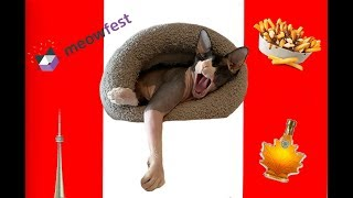 Download Video The Lord Heads to Toronto for Meowfest MP3 3GP MP4