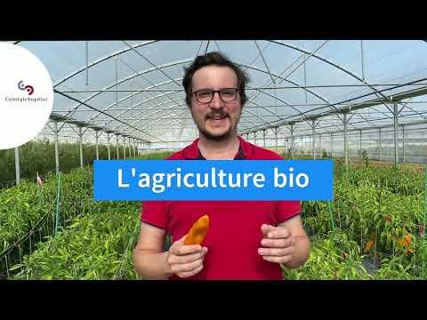 Alancienne : la preuve du succès de l'agroécologie