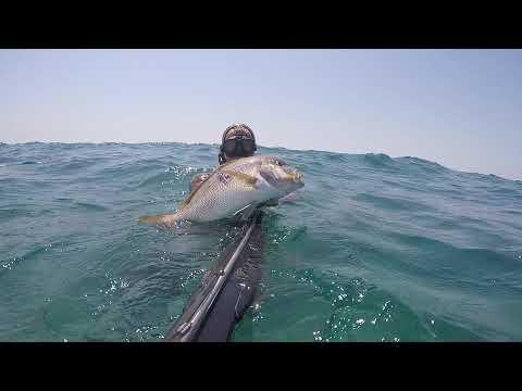 Spearfishing lebanon/dentex
