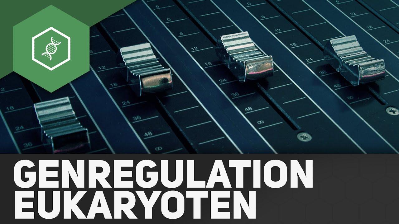 Genregulation bei Eukaryoten ○ Gehe auf SIMPLECLUB.DE/GO & werde ...