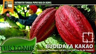Budidaya Tanaman Kakao Berbuah Lebat Tahan Penyakit-Teknologi Organik NASA
