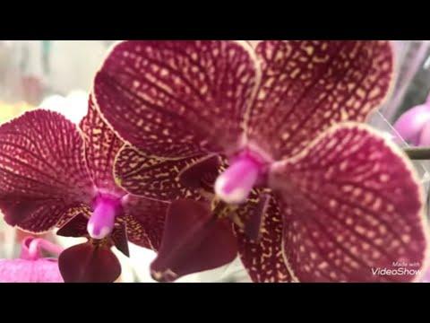 Орхидеи и другие Цветы в Леруа Мерлен.