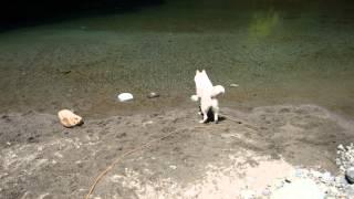 川に投げた木を素直に取りにいけばいいのに、なぜか川辺で大騒ぎ。 そん...