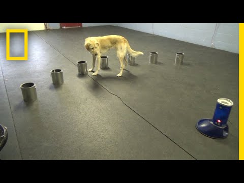 Dogs Detect Signs of Epileptic Seizures | National Geographic