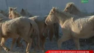 В республике возрождают знаменитую Татарскую породу лошадей(, 2017-02-09T14:22:13.000Z)