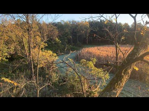 2020 Early Season Crossbow Deer Hunting Iowa County WI (Buck Down)