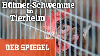 Abgabewelle in Tierheimen: