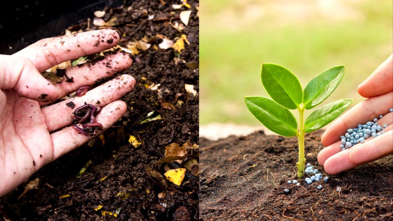 para qu sirve el abono orgnico compost ventajas del abono orgnico