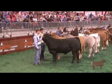 HLSR 2012 - Grand Champion Steer Selection