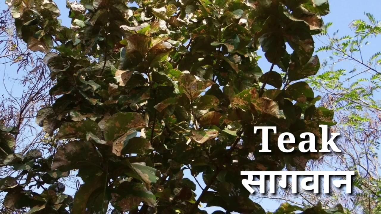 Tree Name Hindi And English With Image