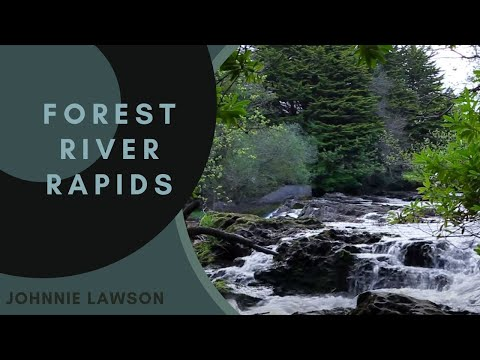 Nature Sounds-Forest Birds Singing-Sound of Water-Relaxing Natural Music of Nature for Sleeping