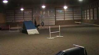 Huck Agility Indoors @ Rr Professional Dog Training