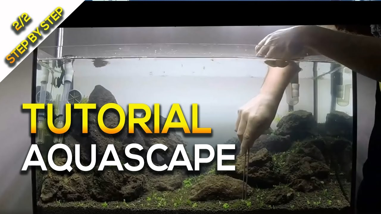 Amazing Tutorial Aquascape Nature Aquarium Tank Step By Step 2 Part By Giuseppe  Nisi   YouTube