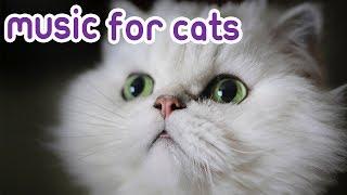 How to Sleep Send my Kitten to Sleep! Why my Cat Won't Sleep!