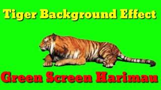 TIGER GREEN SCREEN - EFFECT HARIMAU