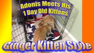 Tom Cat REACTS When He Sees His Kittens - CUTE!!