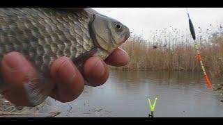 Ловля карася на поплавок в дождь и снег Зимняя рыбалка Январь 2021 My fishing