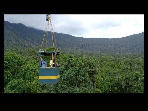Daintree Rainforest Observatory: Classroom In The Rainforest