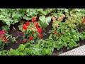 Сад мечты...Идеальный сад моей мамы...