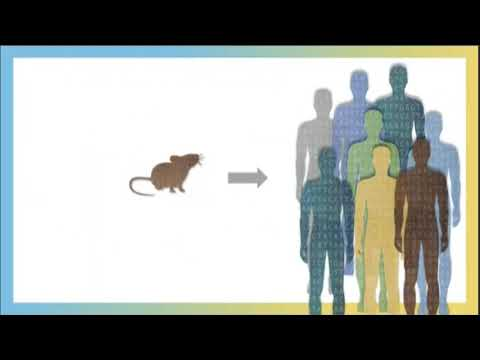 Using mice to unravel the mysteries of COVID-19 disease