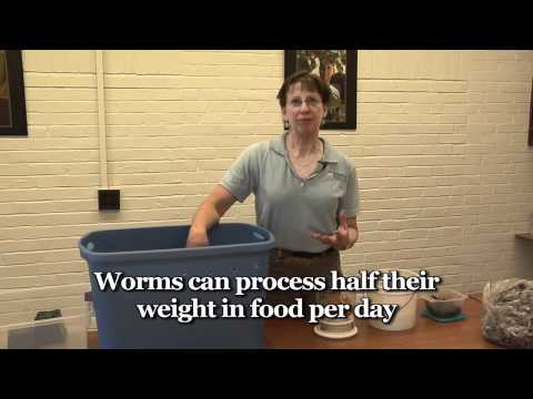 Worm Composting, University of Maine