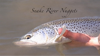 Fishing The Snake River of Idaho- Monster Brown Trout