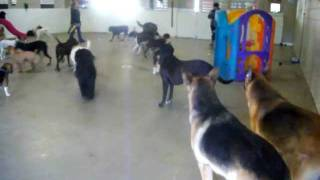 Ball Time In Varsity Field At Canine Campus Dog Daycare & Boarding