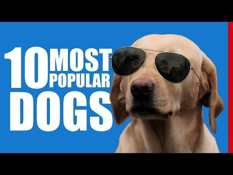 Top 10 Most Popular Dog Breeds 2017