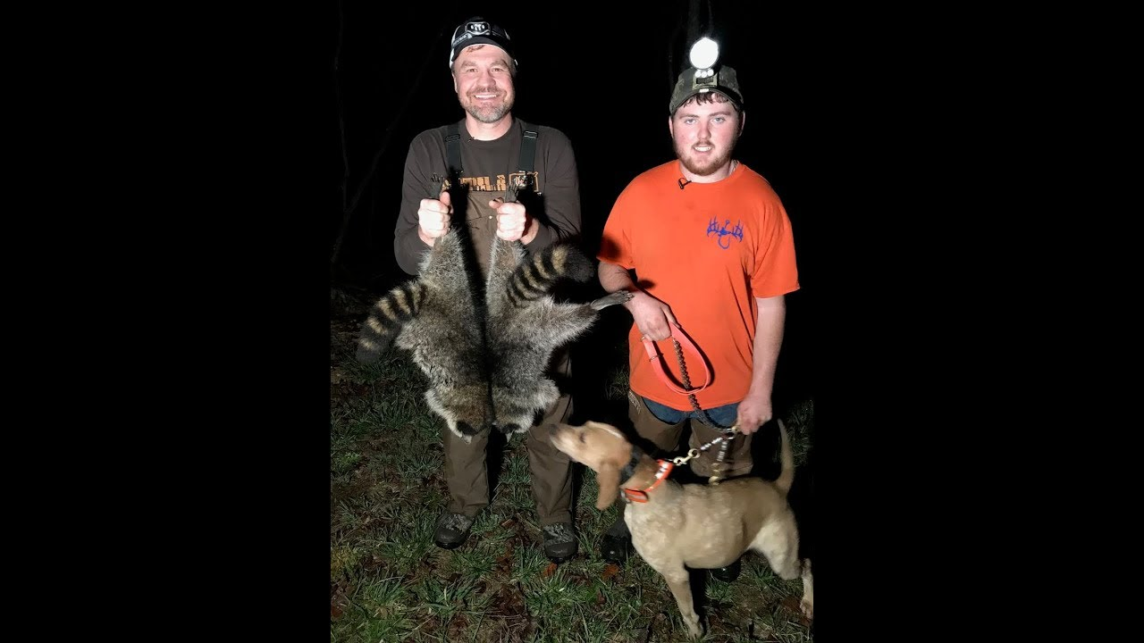 Coon hunting with Hounds |Carolina ALL OUT| S-2/Ep 5