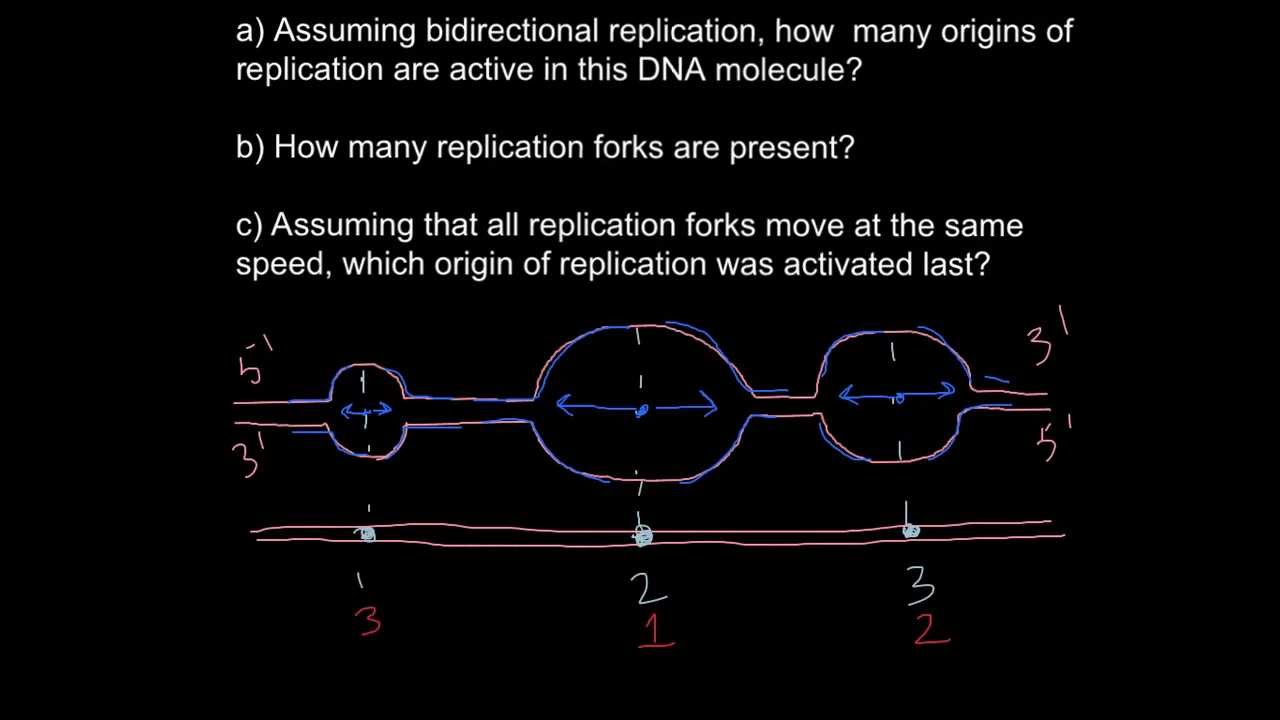 Dna Origin Of Replication Youtube