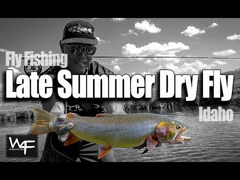 W4F - Fly Fishing Dry Fly - Late Summer