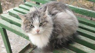 Three beautiful cats meow on the street