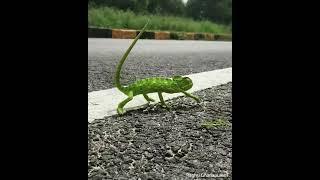 Chameleon   Listen To Me Now
