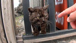 ちょっと強面の野良猫、撫で撫でしてみたら人懐っこい猫だった thumbnail