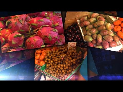 fruit ninja games prickly pear fruit
