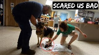 im-sorry-we-never-wanted-this-to-happen-to-our-german-shepherd-guard-dog