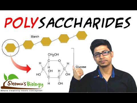 Polysaccharides biochemistry and structure