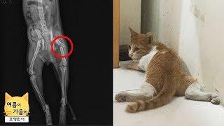 교통사고로 하반신이 마비된 아기 길고양이 구조, 1차 수술 경과가 좋아요.