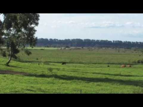 Land for Sale Sydney NSW ] Turf Farm ] Michael Rossiter ] LJ Hooker real estate