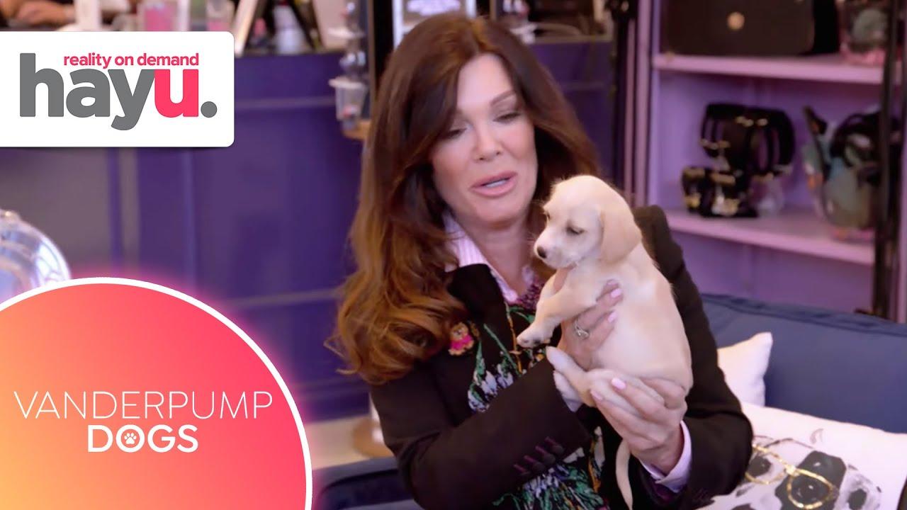 Can Lisa Vanderpump Make the Perfect Furry Match? 🐶    Season 1   Vanderpump Dogs