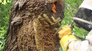 Business Stories: Noble Nectar Apiaries