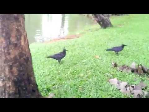 you see animal -83 : the crow in the public park