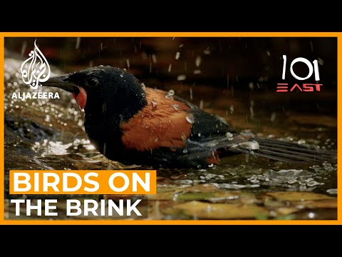 Birds on the Brink - Can New Zealand escape a conservation crisis before it's too late?   101 East