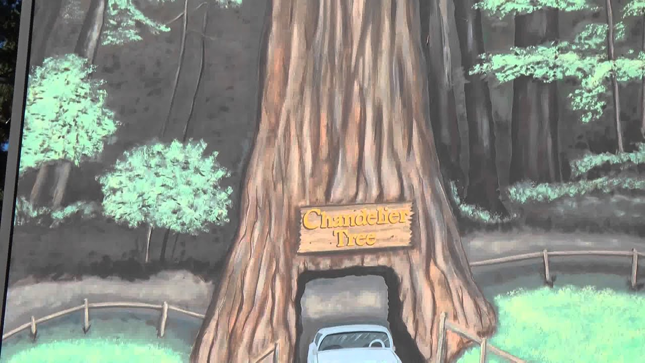 From highway 1 to drive thru giant redwood tree california famous from highway 1 to drive thru giant redwood tree california famous chandelier tree aloadofball Choice Image