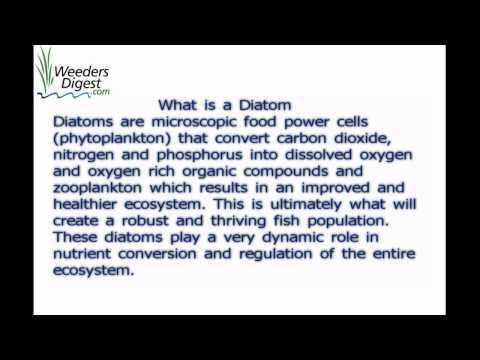 "Details on ""Diatom) ""   Brix CMS"