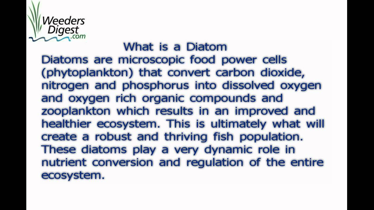 diatoms what are diatoms what is a diatom youtube