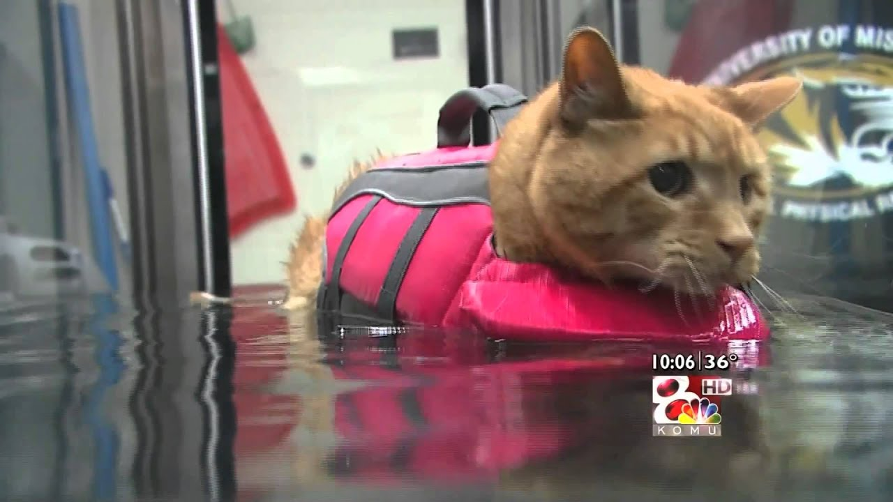 Underwater Treadmill Helps Pets Lose Weight