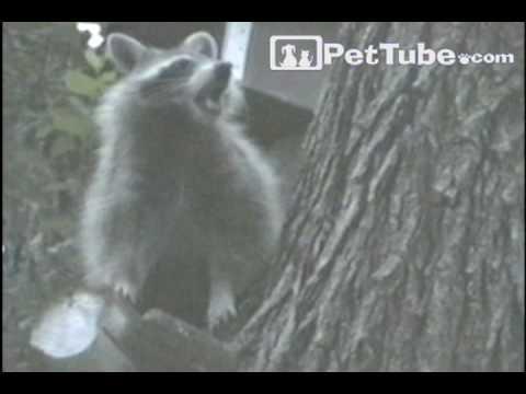 Funniest Pets & People: Episode 9- PetTube