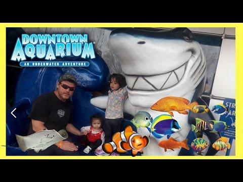 Downtown AQUARIUM At Denver Colorado An UNDERWATER Adventure Stingray Feeding Family Fun Activity